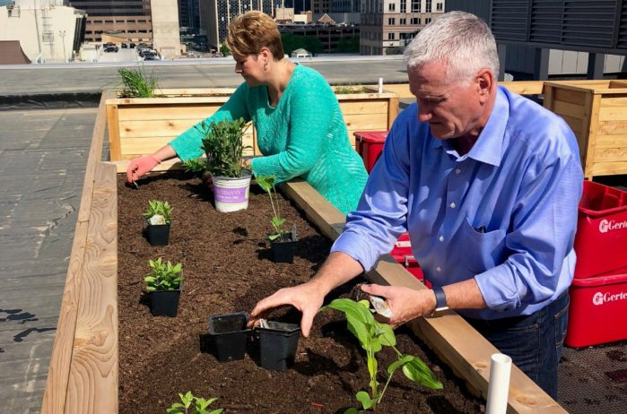 planting herbs in planter boxes on rooftop of the KA headquarters building in Minneapolis.